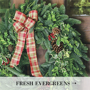 Fresh Evergreens