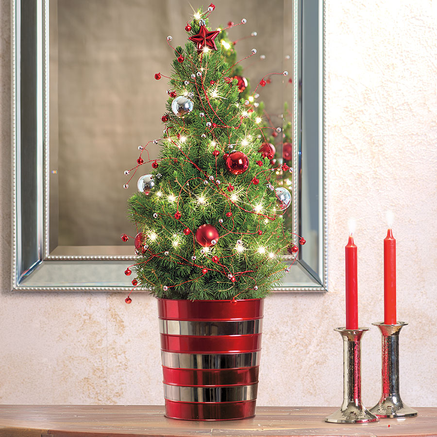 Trending: Our Live Decorated Christmas Trees