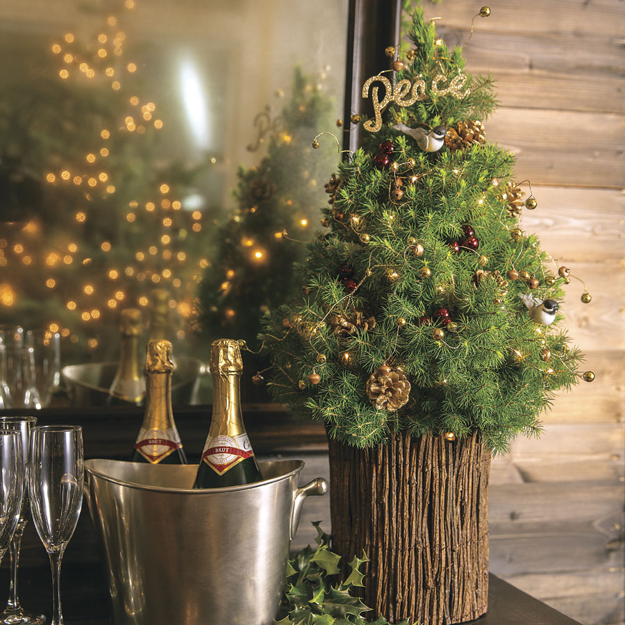 Extreme Christmas Trees: Official Blog Of Jackson & Perkins