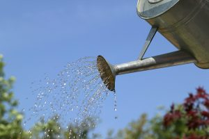 bigstock-Watering-The-Garden-1602289
