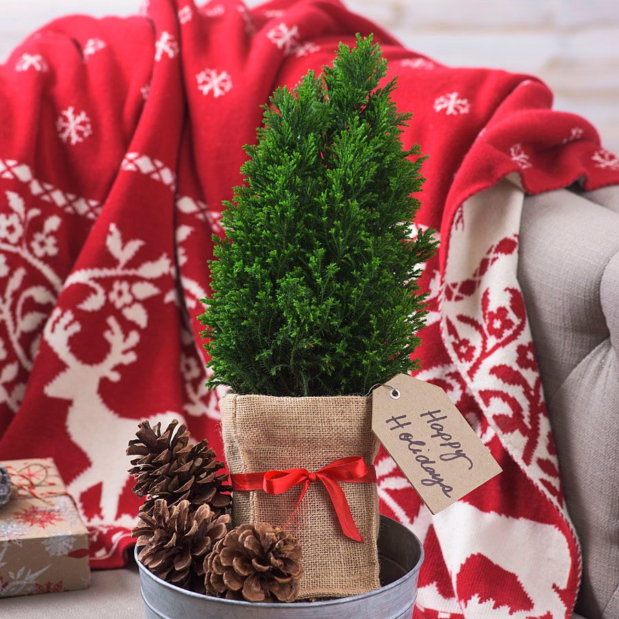 7 Gifts for Holiday Hostess