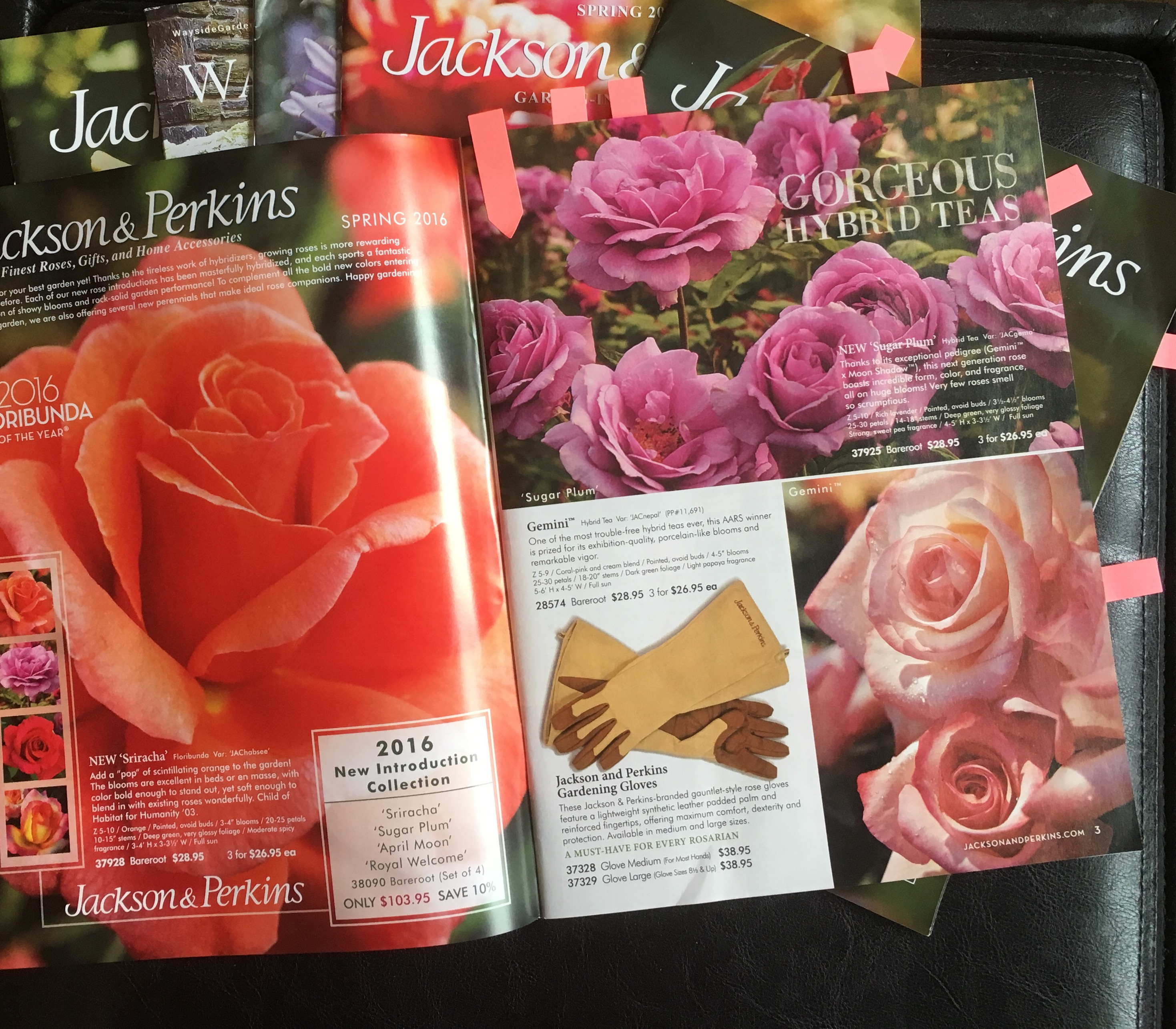 What to Do in the Rose Garden in January - Official Blog of Jackson & Perkins