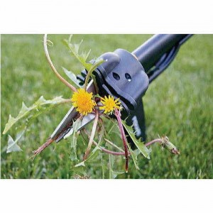 A weeding tool can really save your back. Plus its satisfying to plunge serrated steel into those evil weeds.