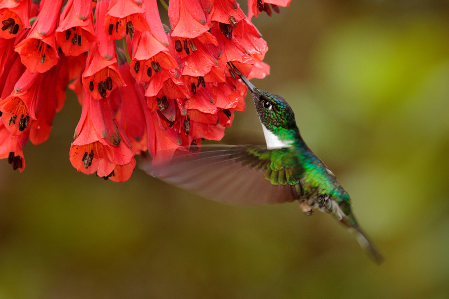 a hummingbird drinking nectar from a red flower