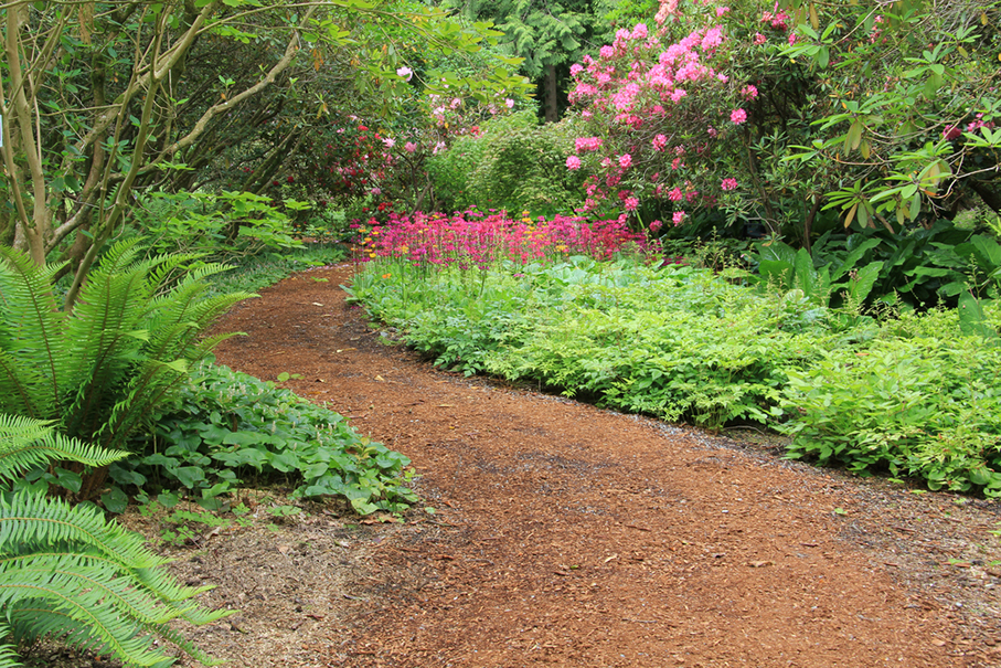 a woodland garden path in the spring